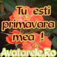 Imagini Primavara