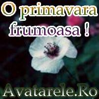 Poze De Primavara