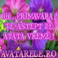 Poze Primavara
